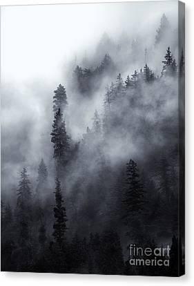 Emerging  Canvas Print by Mike Dawson