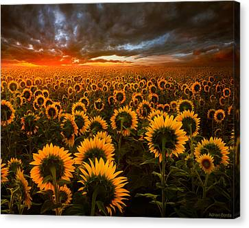 Empire Of The Sun Canvas Print by Adrian Borda