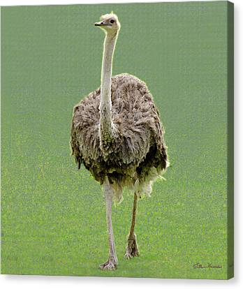 Emu Canvas Print by Ellen Henneke