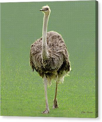 Emu Canvas Print by Ellen Henneke