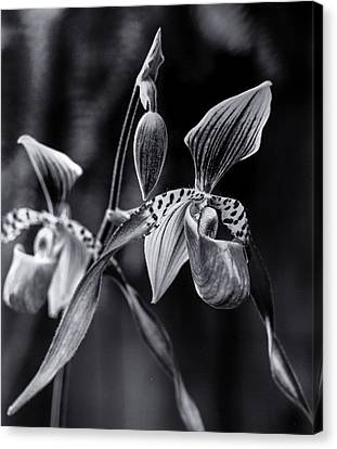 Encinitas Orchid Canvas Print