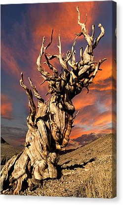 Survivor Art Canvas Print - Enduring by Kathleen Bishop