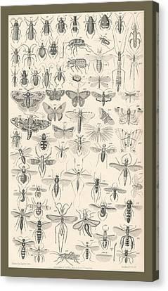 Entomology Canvas Print by Rob Dreyer