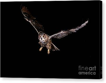 European Eagle Owl Bubo Bubo Canvas Print by Gerard Lacz