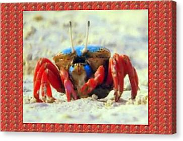 Exotic Crabs Wild Varieties Unique Mating And Crecreation Styles Grand Sizes Building Tunnels In Sta Canvas Print by Navin Joshi