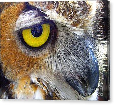 Canvas Print featuring the photograph Eye Of The Owl by Merton Allen