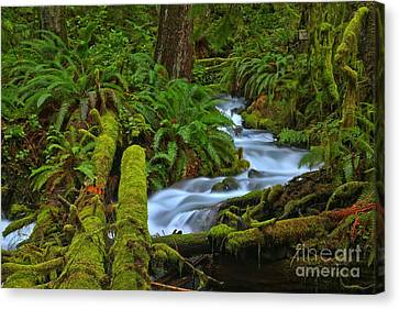 Rainforest Perfection Canvas Print by Adam Jewell