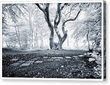 Fairy Tree Canvas Print by Keith Elliott