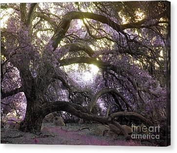 Fairy Tree Canvas Print by Robert Ball