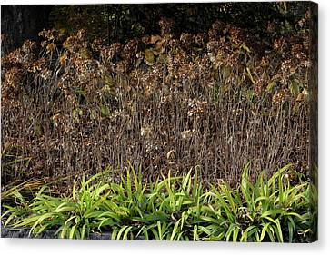 Canvas Print featuring the photograph Fall Contrasts by Deborah  Crew-Johnson