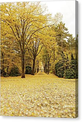 Canvas Print featuring the photograph Carpet Of Golden Leaves by Ivy Ho