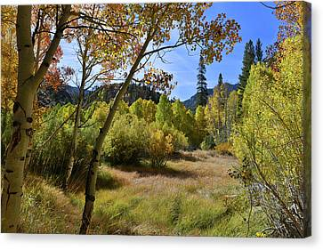 Canvas Print featuring the photograph Fall In Bishop Creek by Dung Ma