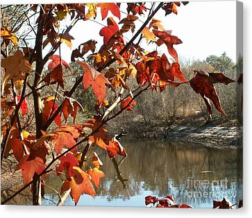Fall On The Withlacoochee River Canvas Print
