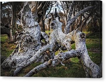 Fallen From Grace Canvas Print by Mark Lucey