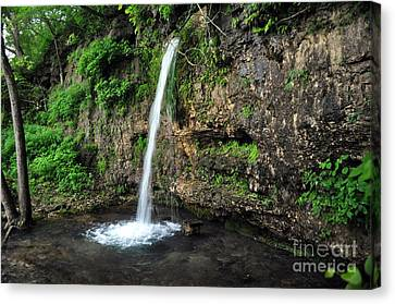 Falling Spring 3 Canvas Print by Marty Koch