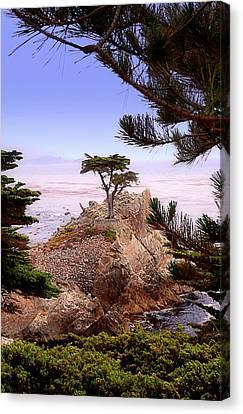 Famous Cypress Canvas Print by Ron Regalado