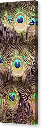 Canvas Print featuring the photograph Fan Of Feathers by Joye Ardyn Durham