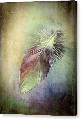 Canvas Print - Feather by Ann Powell