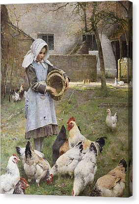 Feeding The Chickens Canvas Print
