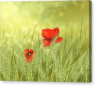 Close Up Canvas Print - Field by Veronica Minozzi