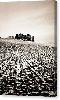 Field With Snow-covered Furrows. Auverge. France. Europe. Canvas Print