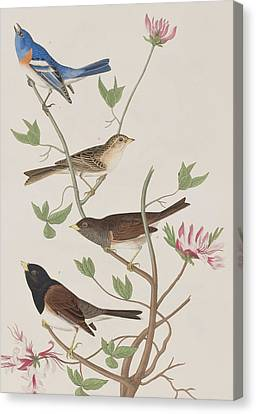 Finches Canvas Print by John James Audubon