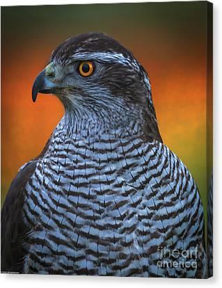 Firebird Canvas Print