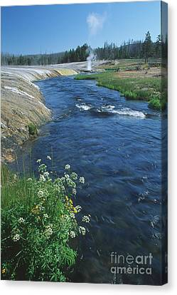 Firehole River Canvas Print by Stan and Anne Foster