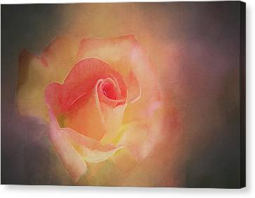 First Bloom Canvas Print by Terry Davis