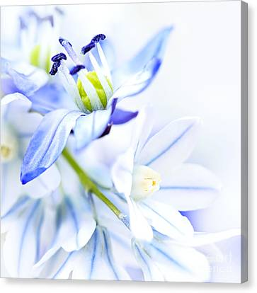 First Spring Flowers Canvas Print
