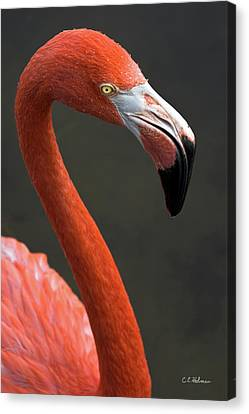 Flamingo Canvas Print by Christopher Holmes