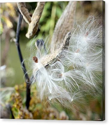 Flight Of The Milkweed Canvas Print by Lauren Radke