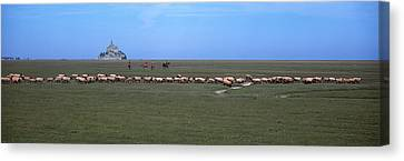 Flock Of Sheep Grazing In A Field Canvas Print by Panoramic Images