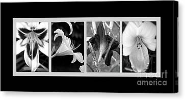 Floral Collage Canvas Print by Sue Stefanowicz