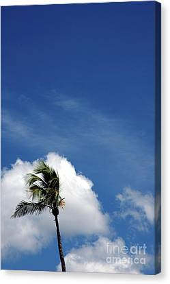 Florida Clouds Canvas Print by Susanne Van Hulst