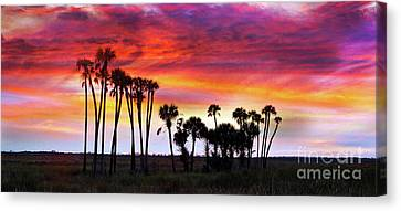 Florida Sunset Canvas Print by Judi Bagwell