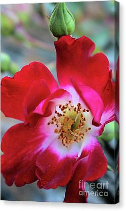 Flower Dance Canvas Print by Victor K