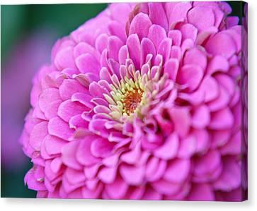 Flower Macro Canvas Print by Edward Myers