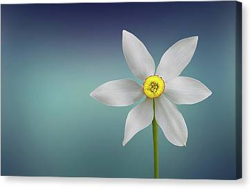 Flower Paradise Canvas Print by Bess Hamiti