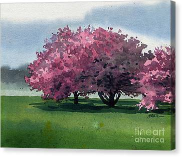 Cherry Tree Canvas Print - Flowering Trees by Donald Maier