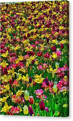 Flowers. Koblenz. Germany. Canvas Print by Andy Za