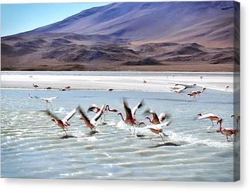 Birds Canvas Print - Flying Flamingos by Sandy Taylor