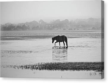Foggy Morning Crossing Canvas Print