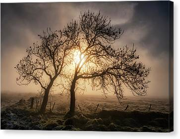 Canvas Print featuring the photograph Foggy Morning by Jeremy Lavender Photography