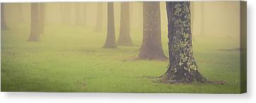 Canvas Print featuring the photograph Foggy Trees Pano by Joye Ardyn Durham
