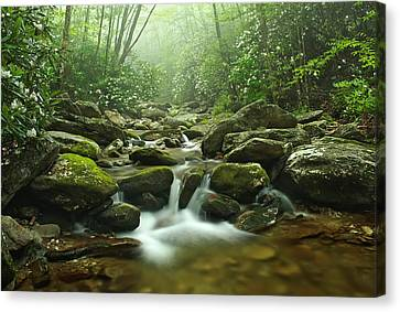 Forest Blessing Canvas Print by Keith Clontz