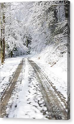 Forest Service Road 76 Canvas Print by Thomas R Fletcher