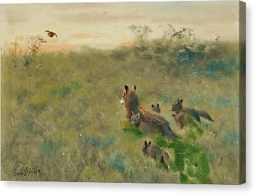 The Tiger Hunt Canvas Print - Fox Family On The Hunt by Bruno Liljefors