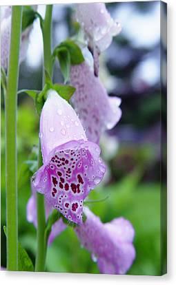 Foxglove Flower Canvas Print