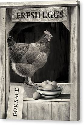 Canvas Print featuring the photograph Fresh Eggs by Robin-Lee Vieira